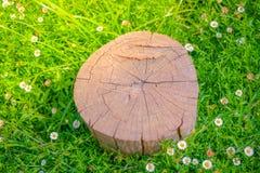 Закройте вверх дерева пня на зеленой траве с цветком Стоковые Изображения