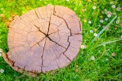 Закройте вверх дерева пня на зеленой траве с цветком Стоковая Фотография RF
