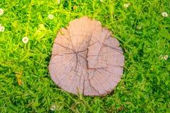 Закройте вверх дерева пня на зеленой траве с цветком Стоковая Фотография