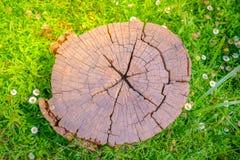 Закройте вверх дерева пня на зеленой траве с цветком Стоковое Изображение