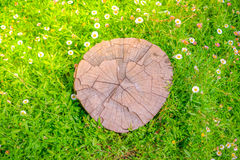 Закройте вверх дерева пня на зеленой траве с цветком Стоковые Фото