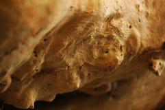 Закройте вверх естественно Texturized ствола дерева стоковое фото