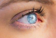 Закройте вверх женского голубого глаза Стоковая Фотография