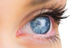 Закройте вверх женского голубого глаза Стоковые Изображения