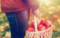 Закройте вверх женщины с яблоками в корзине на осени Стоковая Фотография