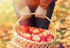 Закройте вверх женщины с яблоками в корзине на осени Стоковое Изображение RF