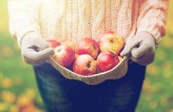 Закройте вверх женщины с яблоками в осени Стоковая Фотография RF