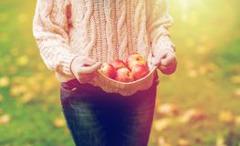 Закройте вверх женщины с яблоками в осени Стоковые Изображения RF