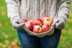 Закройте вверх женщины с яблоками в осени Стоковое Изображение