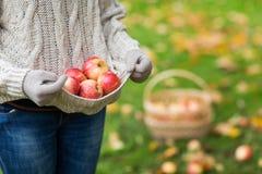 Закройте вверх женщины с яблоками в осени Стоковая Фотография