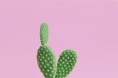 Закройте вверх завода кактуса на розовой предпосылке Стоковая Фотография