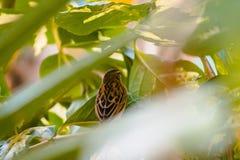 Закройте вверх задней части коричневого цвета и желтой тропической птицы на садах Frederik Meijer в Гранд-Рапидсе Мичигане стоковая фотография