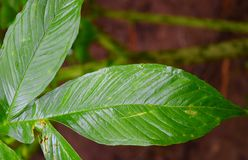 Закройте вверх зеленых листьев с картиной и текстурой - абстрактной естественной предпосылкой Стоковое Фото