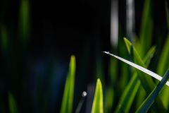 Закройте вверх зеленых листьев с падением воды и темной предпосылки стоковое фото rf
