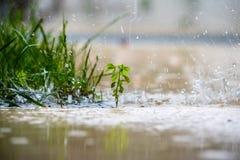 Закройте вверх зеленого растения Стоковое Фото