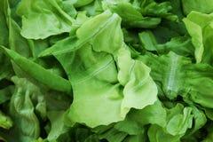 Закройте вверх зеленого свежего салата стоковая фотография rf