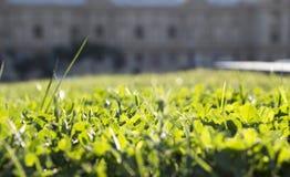 Закройте вверх зеленой травы с пунктом фокуса Стоковая Фотография RF