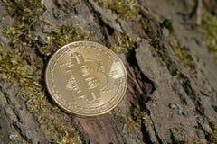 Закройте вверх золотого bitcoin монетки на мшистой предпосылке расшивы Стоковое Изображение RF
