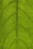 Закройте вверх листьев Стоковая Фотография