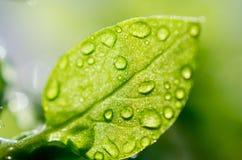 Закройте вверх листьев Стоковые Изображения