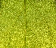 Закройте вверх листьев Стоковое фото RF