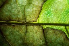 Закройте вверх листьев Стоковое Изображение RF