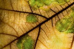 Закройте вверх листьев Стоковая Фотография RF