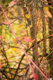 Закройте вверх лист дерева в цветах осени между ветвями Стоковое Фото
