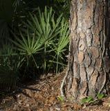Закройте вверх лист зеленого цвета хобота сосны и ладони вентилятора в лесе Стоковые Изображения