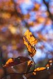 Закройте вверх лист осени Стоковая Фотография RF