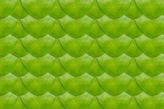Закройте вверх лист hoya Стоковое Изображение RF