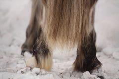 Закройте вверх кабеля белой лошади Стоковое Изображение
