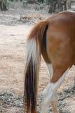 Закройте вверх кабеля лошади Стоковые Фото