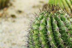 Закройте вверх кактуса сформированного глобусом Стоковые Фото