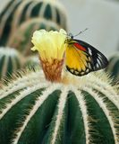 Закройте вверх кактуса. стоковые фото