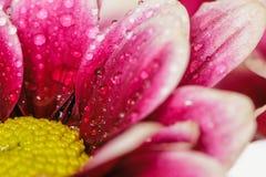 Закройте вверх капелек воды на цветках Стоковые Фото