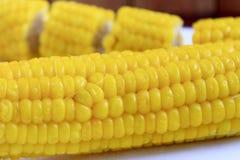 Закройте вверх кипеть corns Стоковое Изображение
