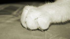 Закройте вверх когтя кота при ноготь выкапывая в материал Стоковая Фотография