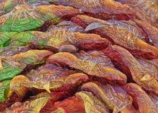 Закройте вверх конуса сосны Bunya стоковое изображение