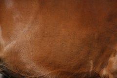 Закройте вверх коричневого пальто лошади Стоковое Изображение