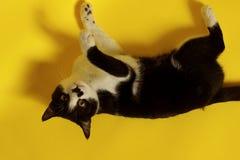 Закройте вверх кота, подрезанной съемки портрет персонажей из мультфильма животных смешной изолированный Кот Стоковые Изображения RF