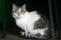 Закройте вверх кота с изуродованным глазом Стоковое Изображение RF