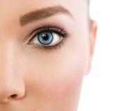 Закройте вверх красивого голубого глаза стоковая фотография