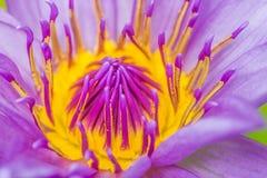 Закройте вверх красивого цветка Стоковые Фото