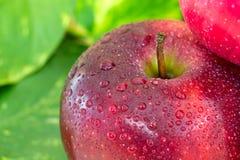 Закройте вверх красивых яблок с капелькой на bac лист зеленого цвета нерезкости Стоковое Фото