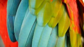 Закройте вверх красных попугая ары шарлаха Амазонки или Ara Макао, в портрете тропической живой природы леса джунглей красочном п сток-видео