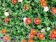 Закройте вверх красочной предпосылки природы цветков Стоковое фото RF