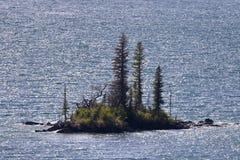Закройте вверх крошечного одичалого острова гусыни в национальном парке ледника Стоковая Фотография