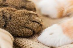 Закройте вверх лапок 2 котов на одеяле Стоковая Фотография RF