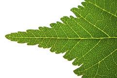 Закройте вверх листьев Стоковое Изображение